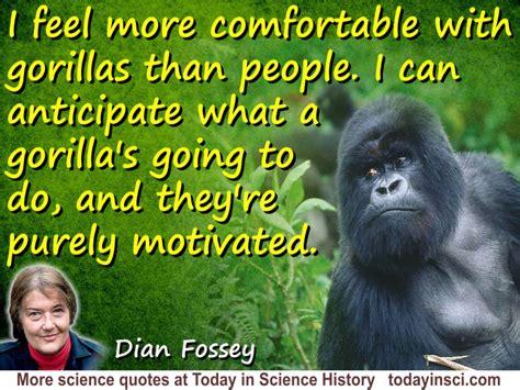 dian fossey quote  feel  comfortable  gorillas