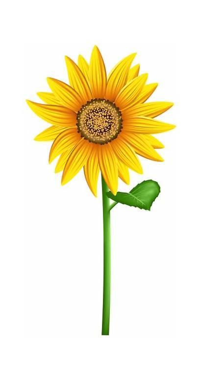 Sunflower Transparent Clip Clipart Background Flowers Yopriceville