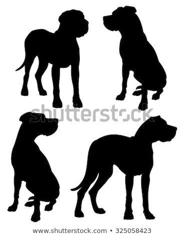 Jump to navigation jump to search. Great Dane Silhouette Stock Images, Royalty-Free Images ...