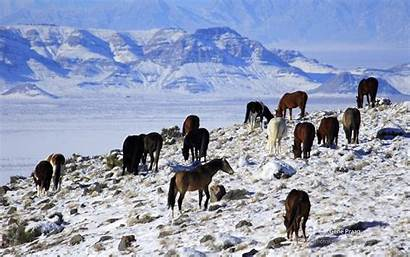 Winter Horses Landscapes Animals Snow Mountains Nature