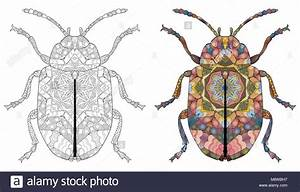 Insect Tattoo Stockfotos Insect Tattoo Bilder Alamy