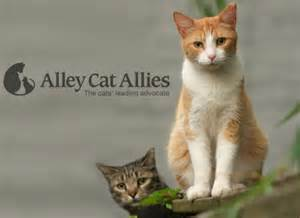alley cat allies beat the heat and spay and neuter your cats pets in omaha