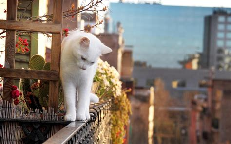 white cat  balcony  cute wallpaper hd wallpapers rocks