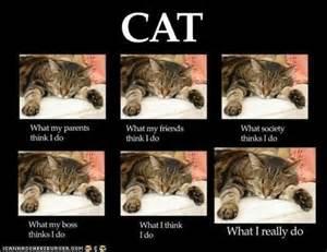 what cat are you ivman s blague a recent meme