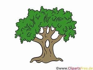 Nutzungsrechte Illustration Berechnen : eiche baum clipart illustration bild kostenlos ~ Themetempest.com Abrechnung