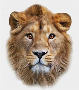 Lion free vector download (626 Free vector) for commercial ...