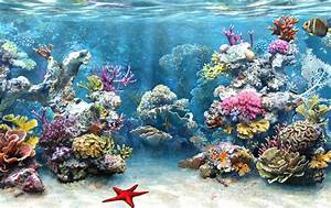 """IMPORTANCE OF CORAL REEFS & MANGROVES"": September 2011"