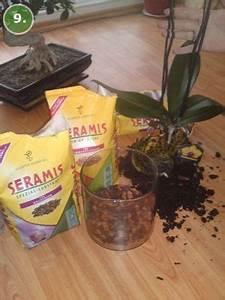 Orchideen Umtopfen Video : orchidee umtopfen orchideen pflegen orchideen ratgeber ~ Watch28wear.com Haus und Dekorationen
