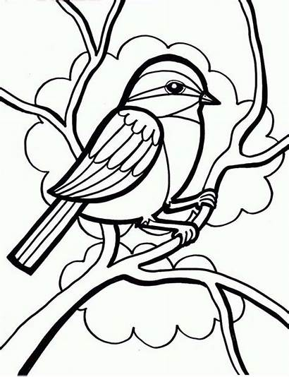 Bird Coloring Drawing Pages Sparrow Chickadee Birds