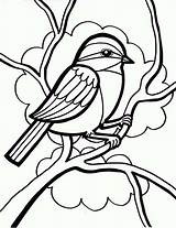 Bird Coloring Drawing Sparrow Pages Chickadee Birds Draw Drawings Easy Singing Printable Simple Books Sparrows Ladybug Line Seeds Eating Popular sketch template