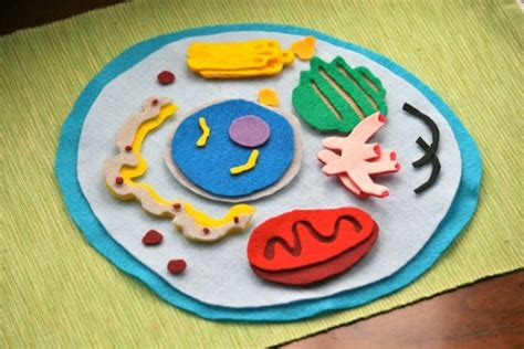 create  plant cell  animal cell models