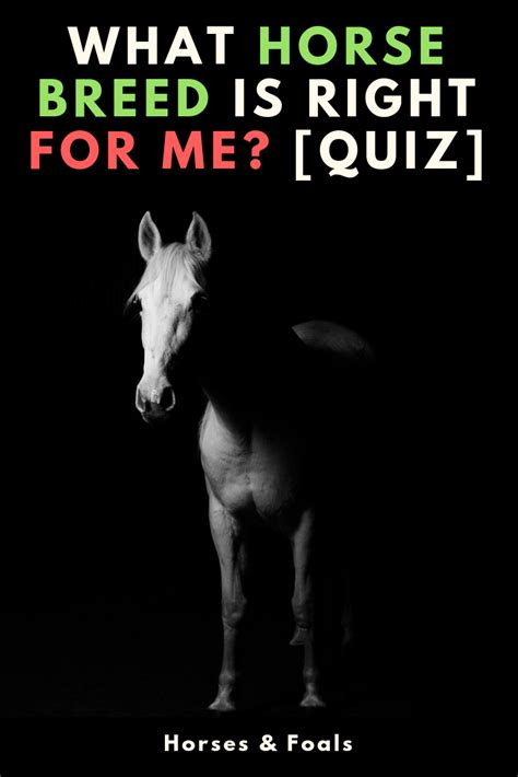 horse breed quiz quizzes breeds questions
