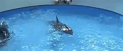 Laser Sharks Beams Hellfire Missile Sith Fricken