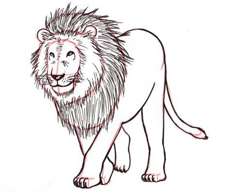 lion drawing step  step  getdrawingscom