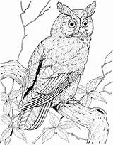 Owl Coloring Animals Tree sketch template