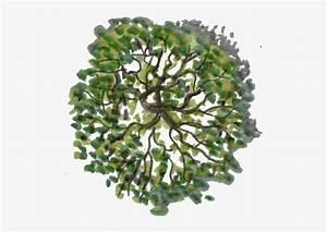 Tree, Plan, Png, Images