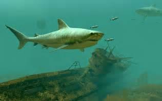 tiger sharks  screensaver  animated  screensaver