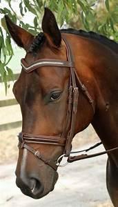 Dressage bridle, Havana brown and Dressage on Pinterest