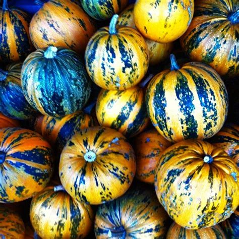 types of pumpkins types of sweet pumpkins pictures to pin on pinterest pinsdaddy