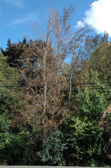plants of the northwest winter injury of landscape plants in the pacific northwest pacific northwest pest management