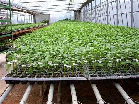 small greenhouse kits hydroponics systems greenhouse arch greenhouses