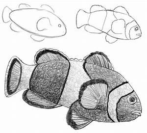 Zeichnen Lernen Mit Bleistift : einen clownfisch zeichnen ~ Frokenaadalensverden.com Haus und Dekorationen