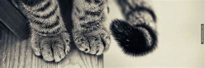Cats Cat Gesture Paws Banner Interviewing Meow