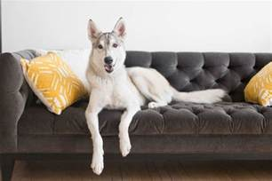best fabric couches for dogs homesfeed
