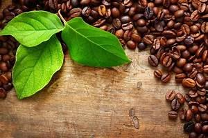 Kopi Luwak Zubereitung : die beliebtesten kaffeesorten weltweit roast market magazin ~ Eleganceandgraceweddings.com Haus und Dekorationen