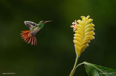 costa rica wildlife  macro photography  toehold