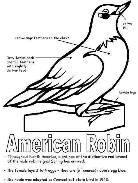 american robin coloring page  images bird coloring