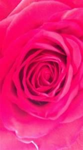 Pink Hot & Neon on Pinterest