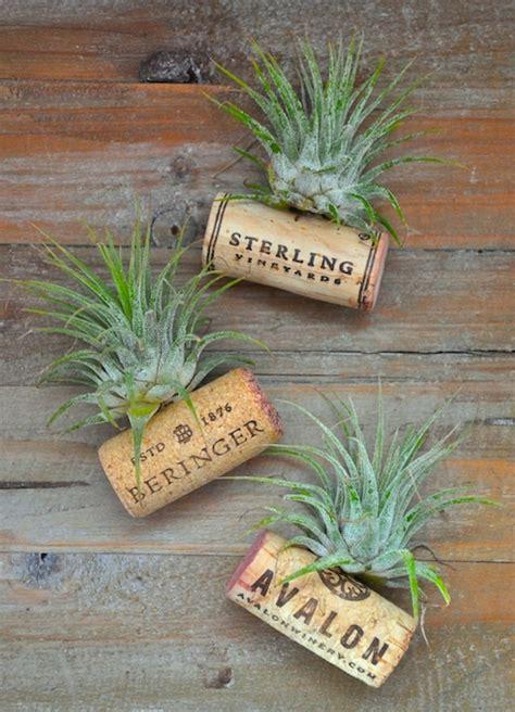 air plant wine bottle cork magnets hometalk