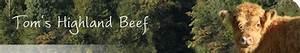 Gefrorenes Hackfleisch Braten : fleischverkauf tom 39 s highland beef ~ Buech-reservation.com Haus und Dekorationen