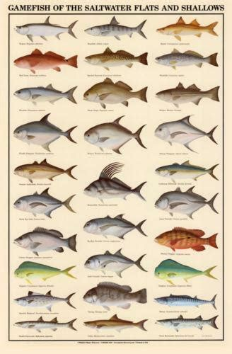 saltwater fishing prints ebay