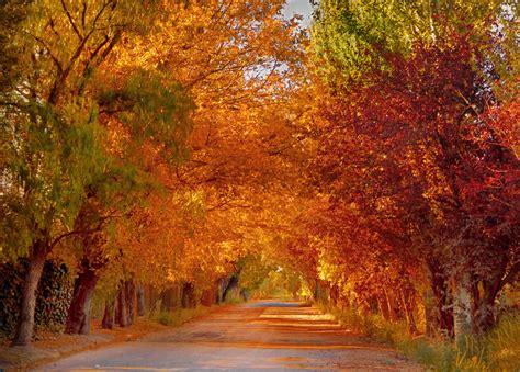 provincial cuisine autumn in mendoza mendoza travel