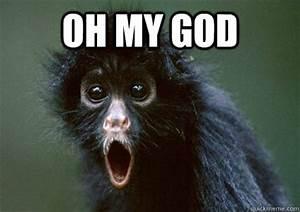 Oh my god - Monkey Omg - quickmeme