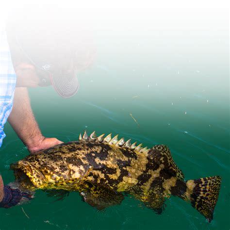 fishing offshore florida grouper keys record