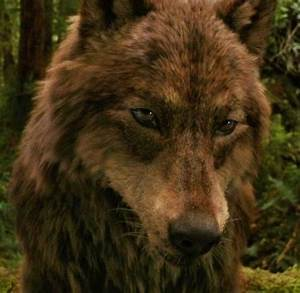 jacob wolf - Jacob Black Photo (24766290) - Fanpop