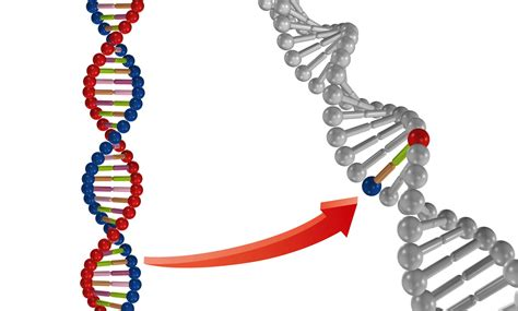 Modification Genetic Organisms by Ethical Dilemma The Pros And Cons Of Genetically Modified