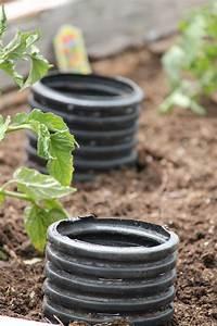 Arrosage Des Tomates : arrosage pieds de tomates piments etc jardin ~ Carolinahurricanesstore.com Idées de Décoration