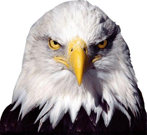 Bald Eagle Images Bald Eagle Transparent Image Bird Graphic