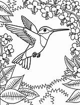 Coloring Hummingbird Pages Printable Bird Adult Hummingbirds Sheets Humming Flowers Getcoloringpages sketch template