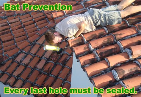 how to remove bats from a barrel tile roof