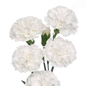 bulk carnations white mini carnation flowers