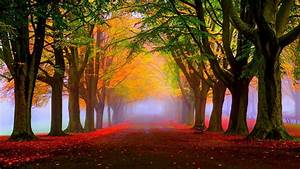 Wallpaper Autumn, Fall, Tress, Fog, Foliage, 5K, Nature, #1773  Fall