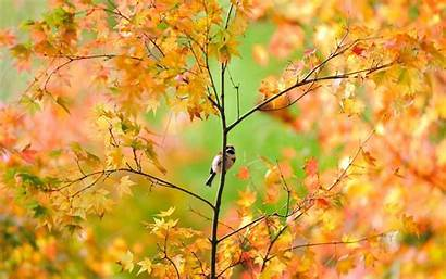 Autumn Leaves Fall Animal Wallpapers Sparrow Through