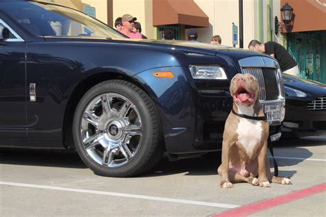 cars  dogs    hot trend   autoevolution