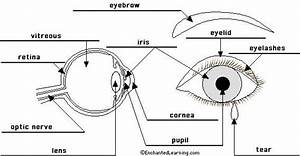 Eye Diagram Labeled