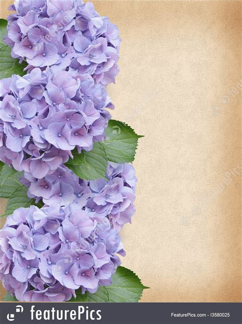 wedding hydrangea floral background